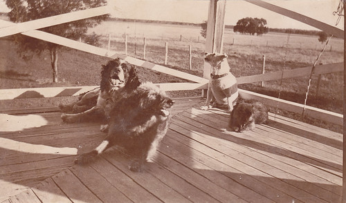 Dogs on the Verandah | by LJMcK