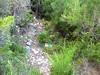 Chemin du Castellucciu Finicione RD : départ de la sente (flèche verte) sur la piste RD de la Sainte-Lucie
