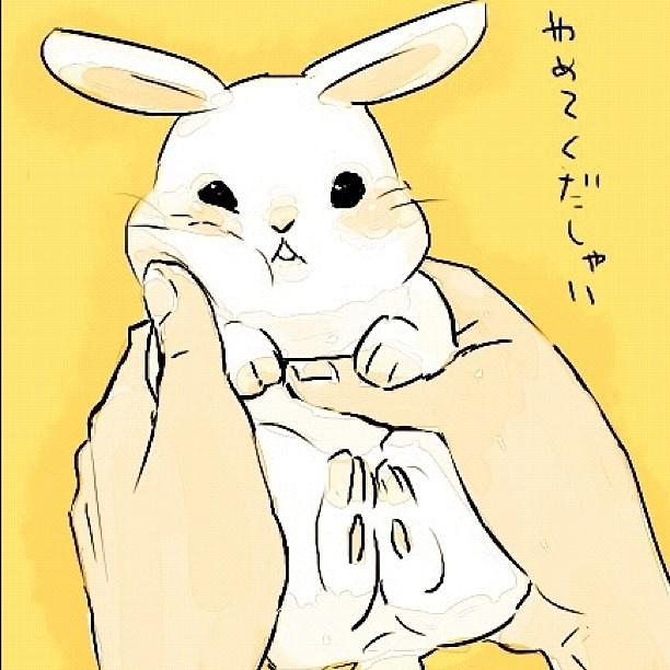 #kawaii #bunny | by kurai_tsukii instagr.am/p/QSmTL0gYuu ...