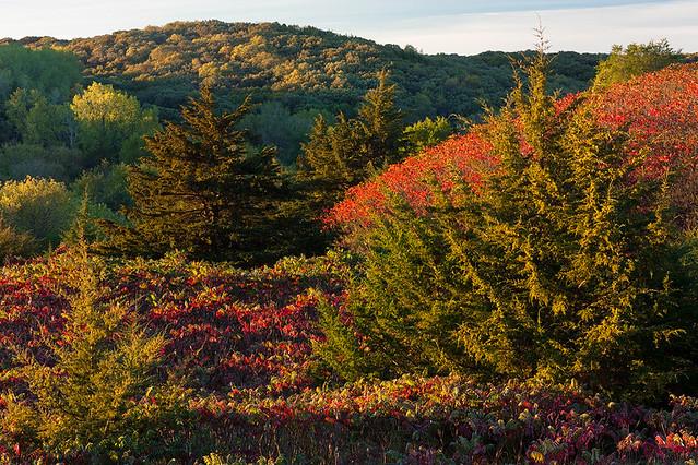 Sumac  Newton Hills State Park