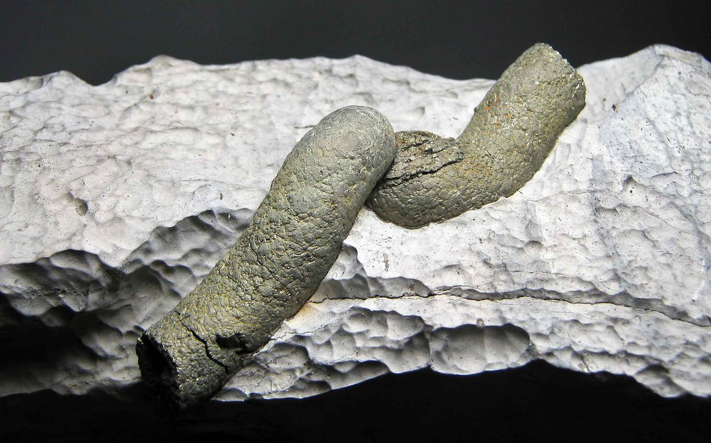 Fossil Worm Tube Filled With Crystalline Pyrite... | Flickr