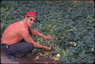 O'Neil with plants, circa 1965 | by OSU Special Collections & Archives : Commons