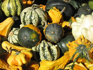 Decorative Gourd Season | by Reclamation Revolution