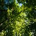 Image ID# Whalen-120911-1937   Hedgehog Brook Trail Seven