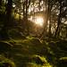 Rhinog Fawr Woods (6 of 9)