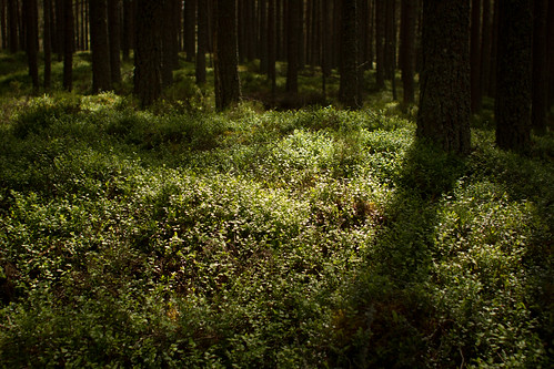 Abernethy Forest Floor | by Duncan R S Harvey