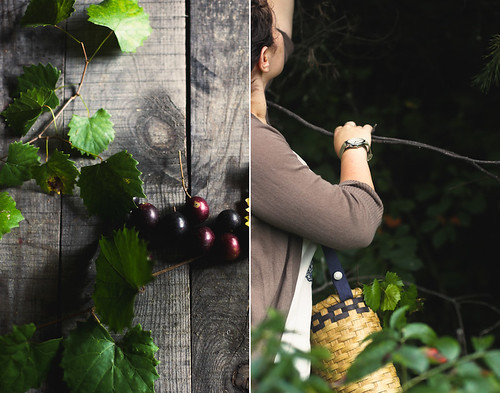 muscadine picking | by hannah * honey & jam