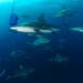 the sardine run 2012 #8