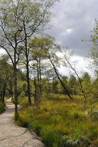 Hautes Fagnes | Hohes Venn | by 22nd frame