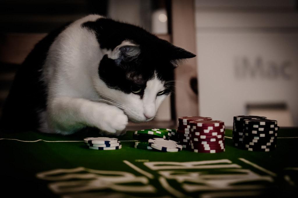 Craps prop bet strategy