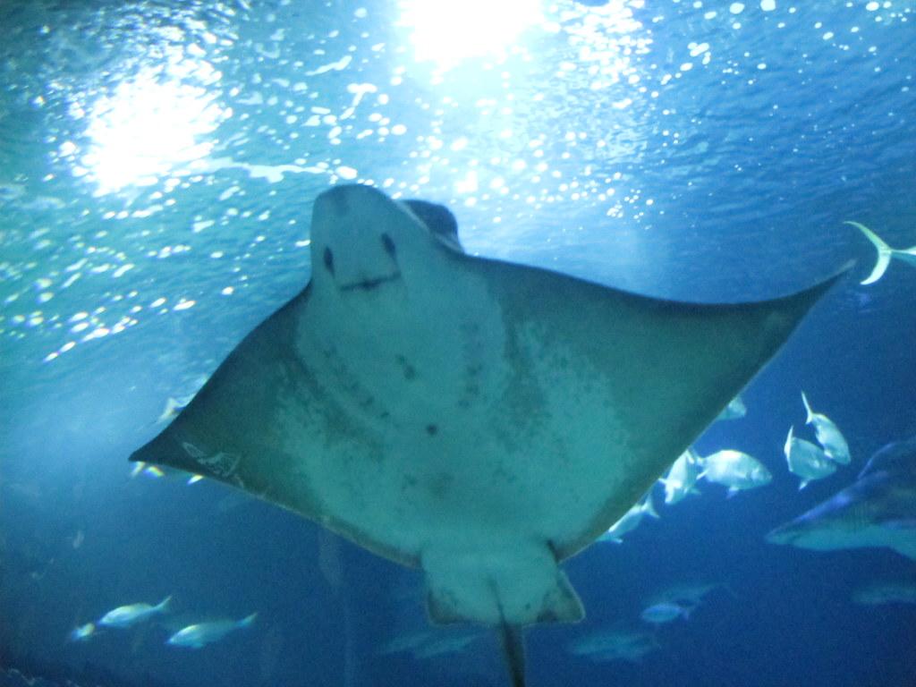 Valencia aquarium duncan c for Aquarium valencia precio