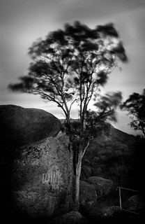 Tree, Melvilles Caves | by William Greenfield