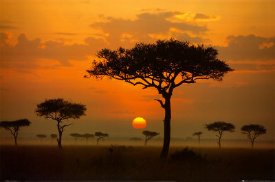 African Summer | by mrnixonpants