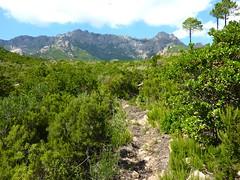 L'arrivée au plateau 487m avant la montée de Livisani