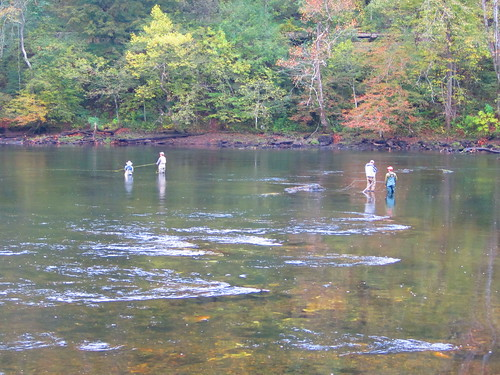 Fly fishing 174 fly fishing on the clinch river clinton for Clinch river fishing