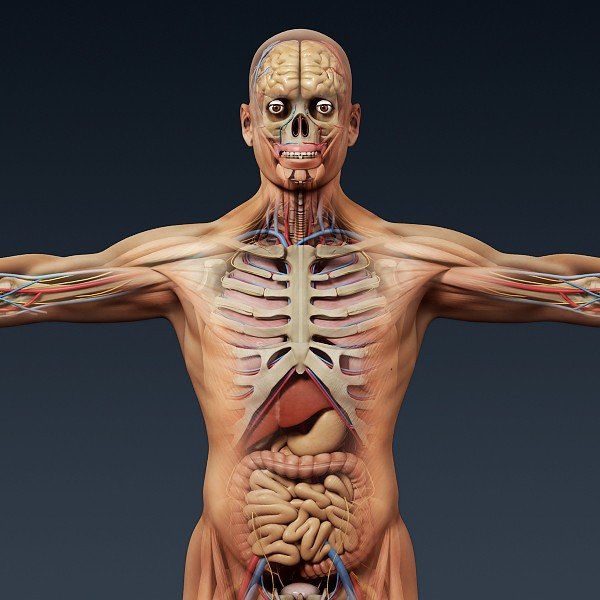Human Anatomy 3d Model This Is Image Human Anatomy 3d Mode Flickr