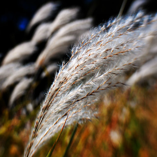 254/365-Blowing in the wind | by Sue.Ann