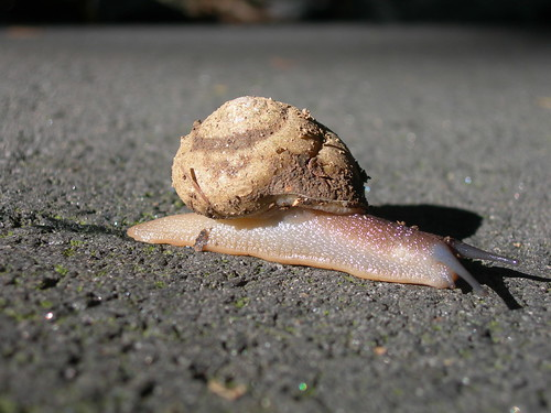 A Snail on Brasstown Bald | by jimmywayne