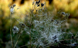 Tangled web woven -Autumn morning | by Collin Shore