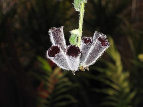No s qu planta es s lo que la vi en un vivero y pude for Que es un vivero ornamental