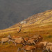 Glen Strathfarrar Rut 2012  2,3,4,5,6,7,8,9.