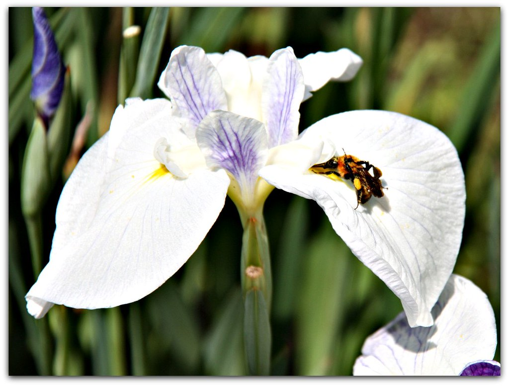the busy bee has no time for sorrows The busy bee has no time for sorrow - quote by william blake on yourdictionary.