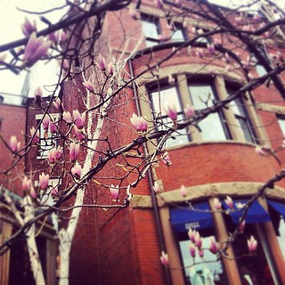 Boston - Spring | by Elissa @ 17 and Baking
