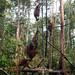 Orangutan World, Tanjung Puting Borneo Adventure-88.jpg