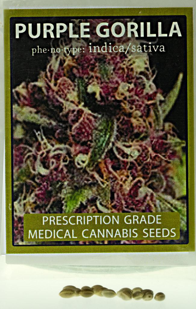 Purple Gorilla Seeds Cbb Purple Gorilla Seeds