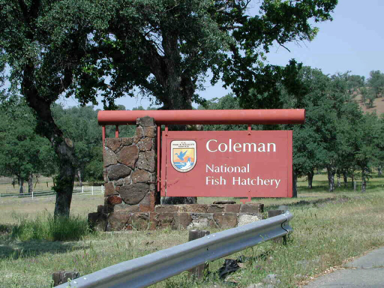 Coleman nfh ca edited coleman nfh coleman fish for Coleman s fish