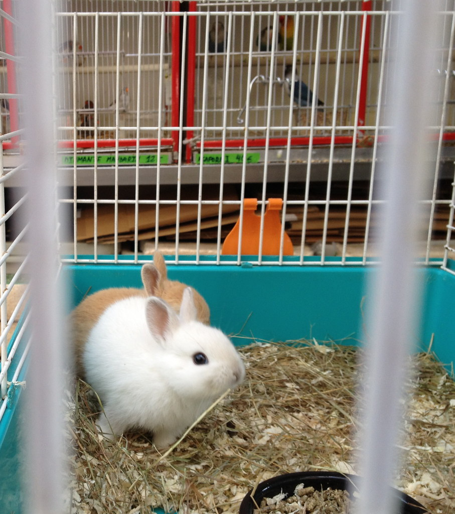baby pet rabbits for sale live baby rabbits tiny
