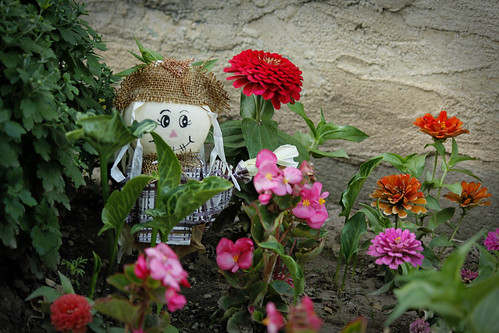 Scarecrow and Flowers | by Dawna Kay