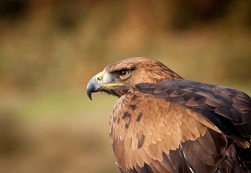 Eagle eyed | by Neil Parker Photography