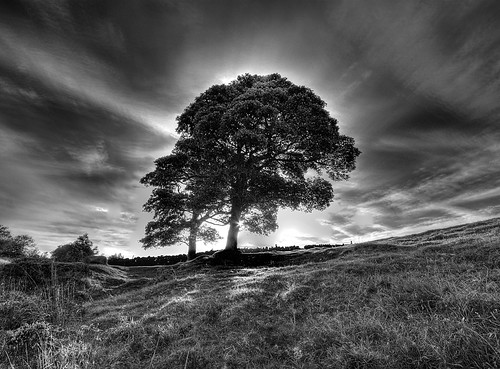 Trees on Baslow Edge | by l4ts