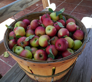 2012-09-08 - Apples - 0005 | by smiteme