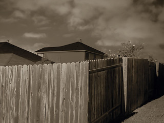 Fence & Climbing Roses.331 | by mcreedonmcvean