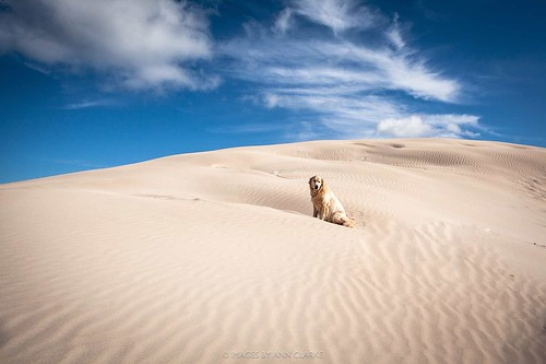 Dune Doggie:) | by Images by Ann Clarke