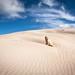 Dune Doggie:)