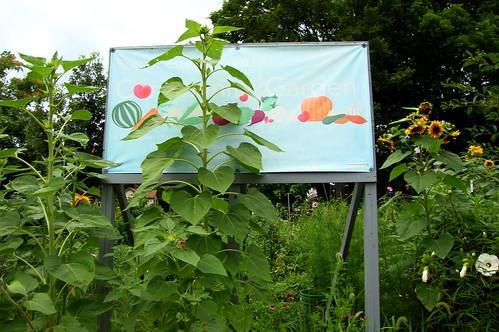 2016 South Cumminsville Community Garden