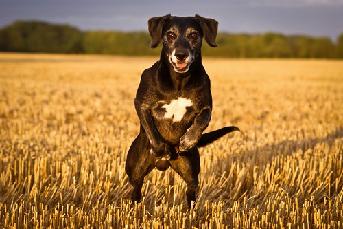 35/52 - Leap Frog Dog *Explore* | by Dogloverlou