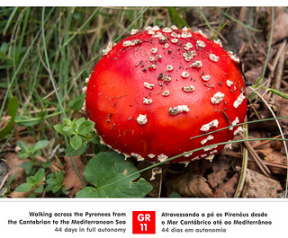 Amanita Muscaria | by red_lion