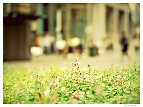 ~ the flower & it's city ~ | by 'ndre