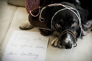 37/52, Dog Shaming | by voteforbear