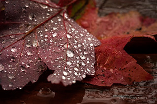 Autumn Diamonds | by Thousand Word Images by Dustin Abbott