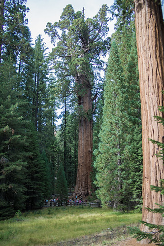 Sequoia National Forest, General Sherman | by Hypnotic Love