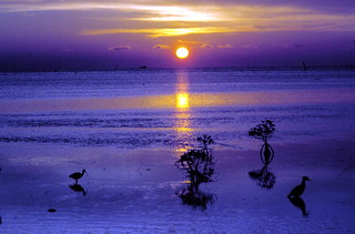 Sunrise on the flats: Key West, Florida | by State Library and Archives of Florida