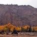 YNP-GTNP-fall-colors05