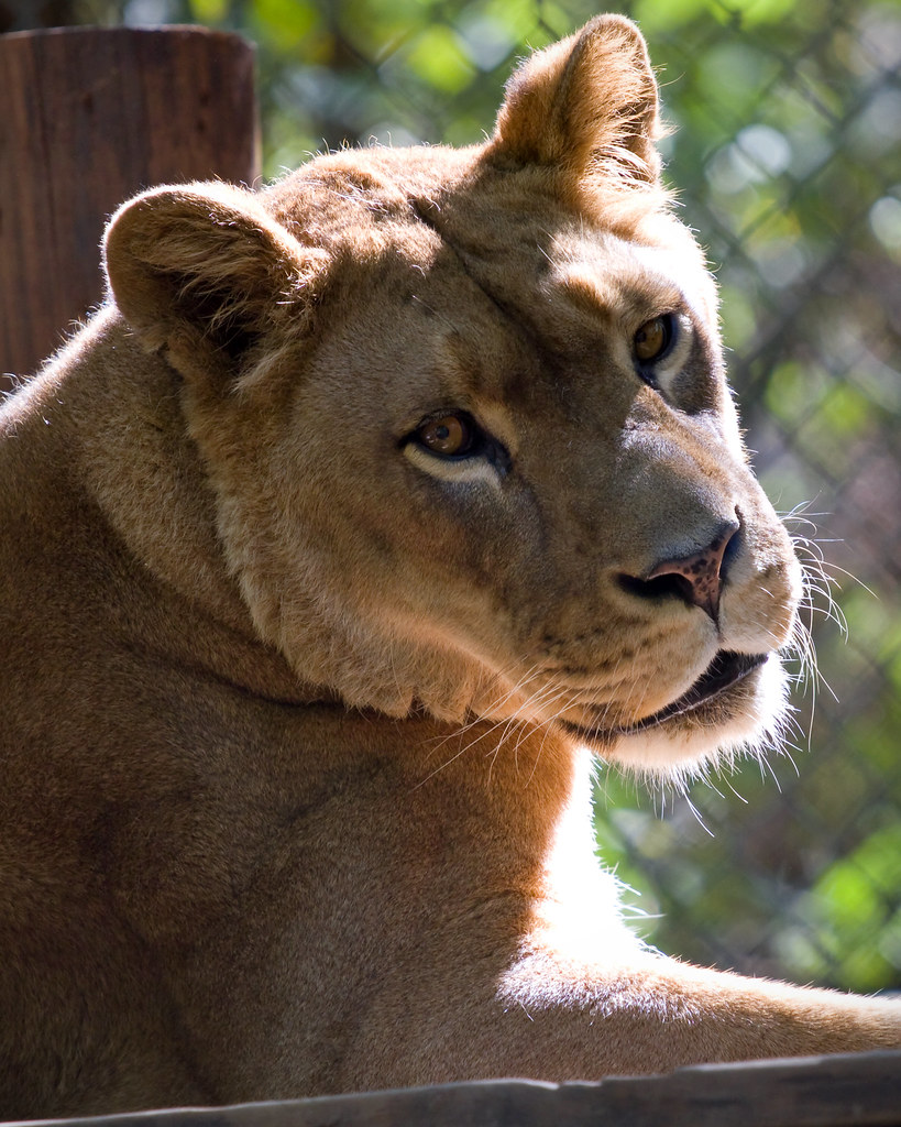 exotic feline rescue center by steve gifford with my paren flickr