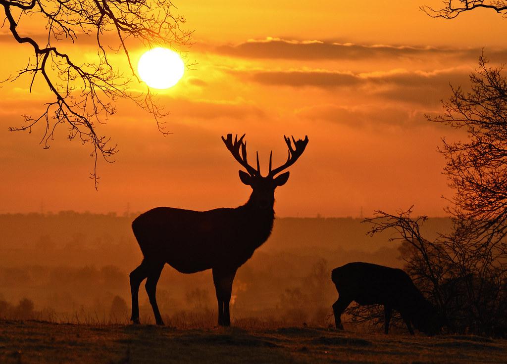 Landscaping Ties Red Deer : Red deer sunrise landscape version d k flickr