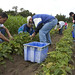 Clagett Farm Day of Service